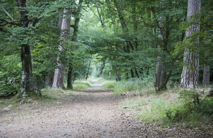 groupement forestier