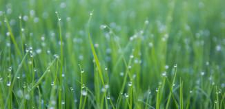 recuperer eau de pluie